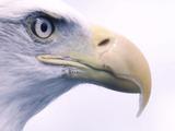 『Assassin's Creed Syndicate』鷹の視点からロンドン再現度を確認!最新映像