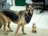 『Fallout 4』ドッグミートが世界の名犬を決める「World Dog Awards」ゲーム部門トップに君臨