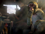 『Far Cry 4』が舞台を山へと移したことによる要素の変化をディレクターが解説