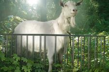 恐竜も逃げ出す! Xbox One/Xbox 360版『Goat Simulator』最新トレイラー 画像