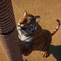 動物園運営シム『Planet Zoo』ゲームプレイ紹介映像! インド亜大陸テーマや新たな動物を披露