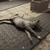 ドッグミートが早速ネコ化!Xbox One版『Fallout 4』公式Mod対応始まるの画像